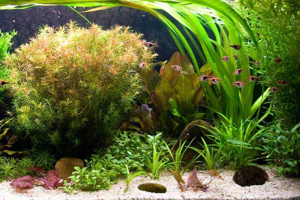 Opstart nieuw aquarium