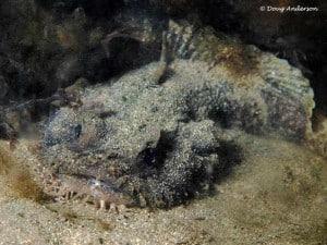 Kikvorsvissen