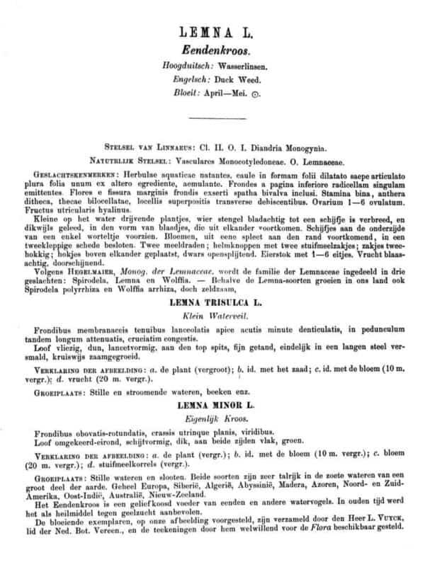 Eendenkroos beschrijving 1898 - Flora Batava, deel 20, Jan Kops en F.W. van Eeden (1898)