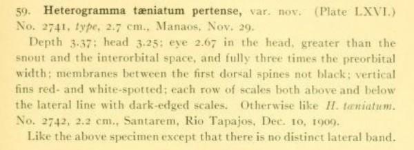 Apistogramma pertensis eerstbeschrijving