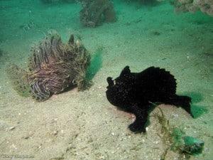 Hengelaarvissen