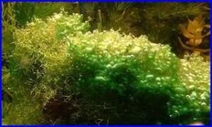 Planten en Algen