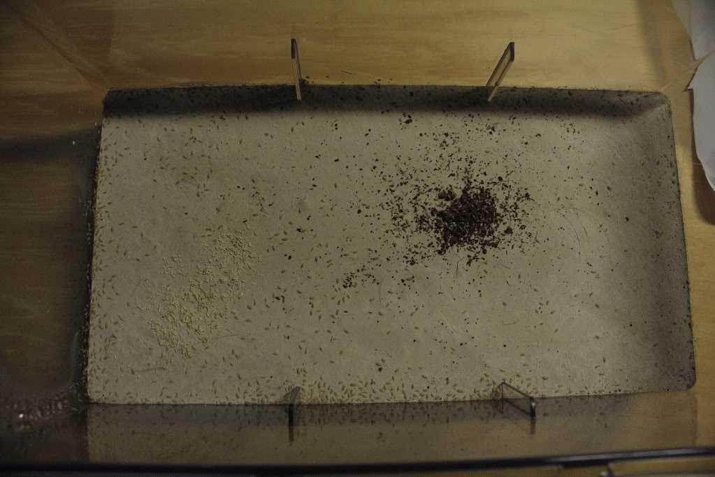 Kweekbak springstaartjes