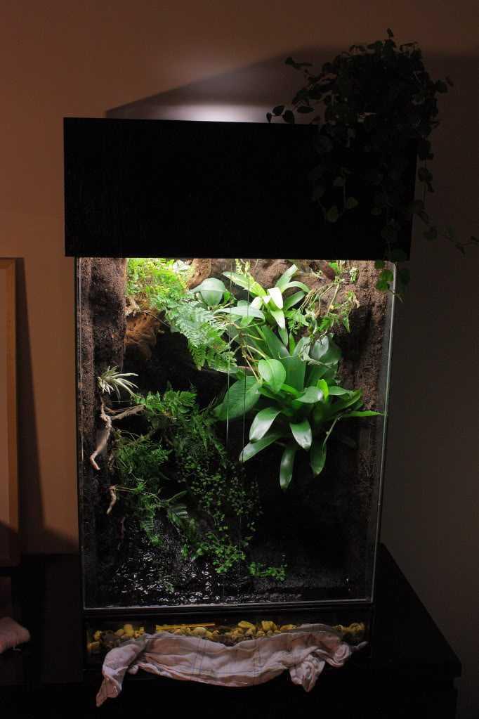 Paludarium met eerste planten