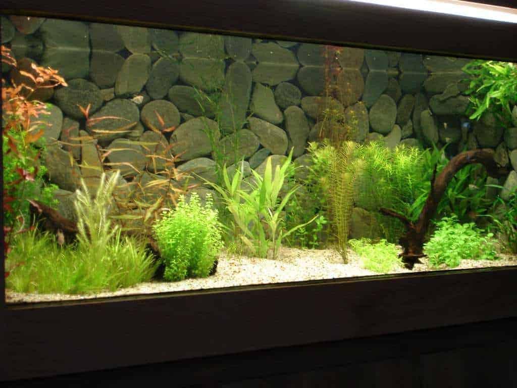 Aquarium met helder water en planten