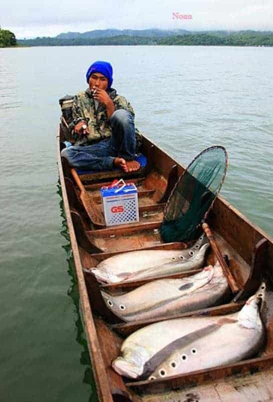 Chitala ornata in vissersboot