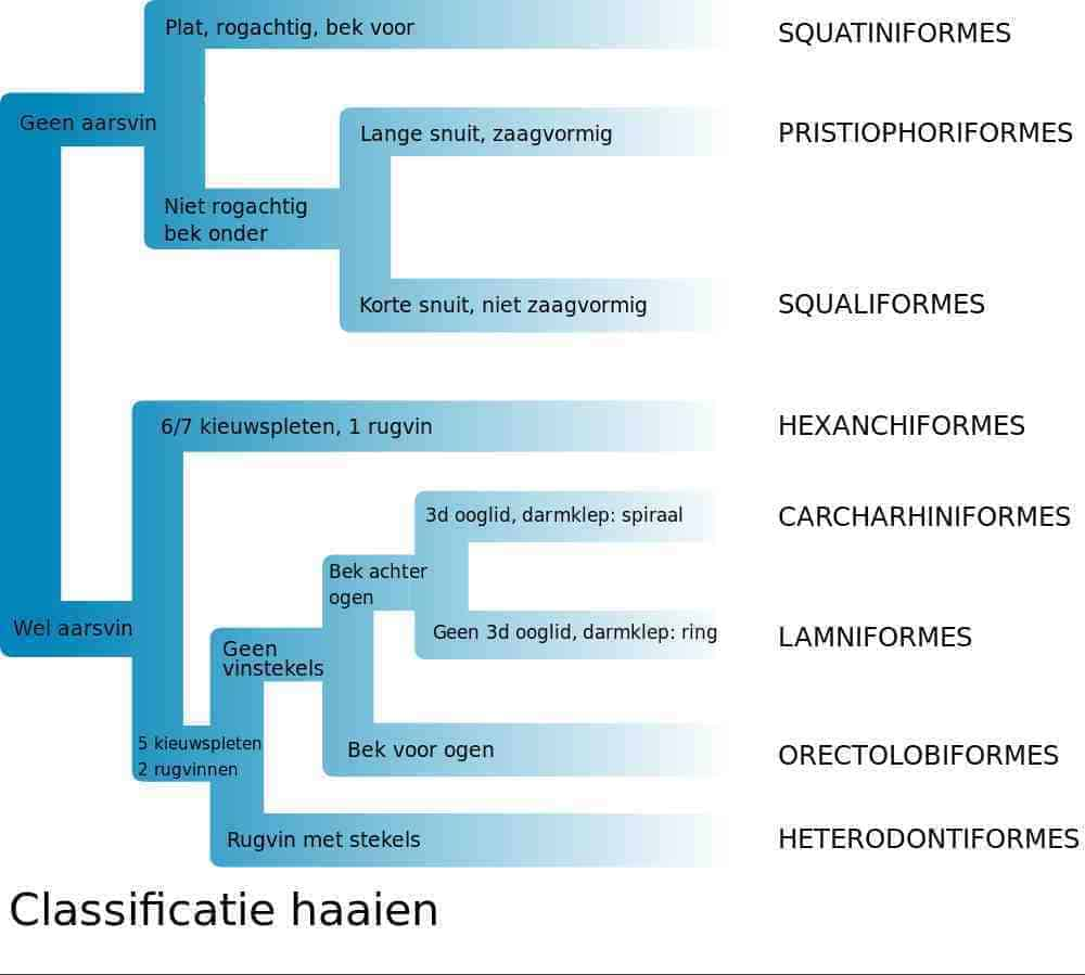 Classificatie haaien
