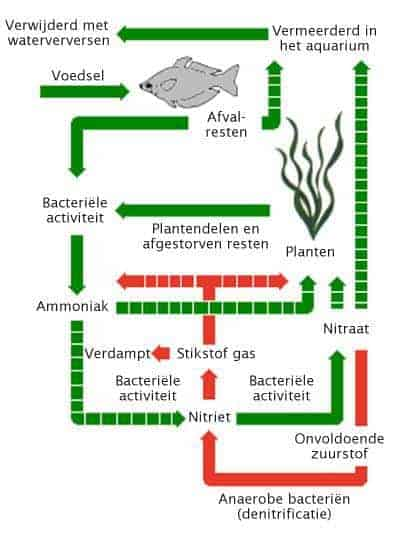 nitraatcyclus in het aquarium