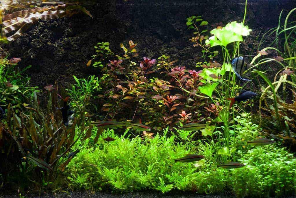 Beste Aquarium Pomp, Filter, Verwarming en Verlichting aan laten? - AquaInfo XA-47