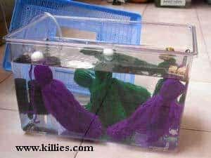 Aquarium met afzetmoppen