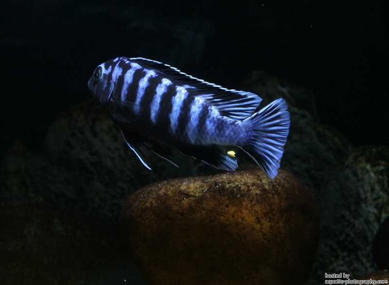 Vis zwemt weg van de camera