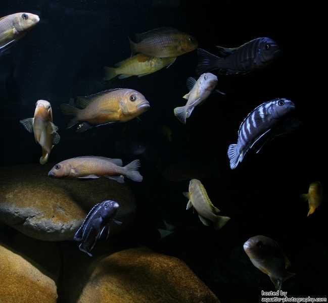 Aquarium overzicht
