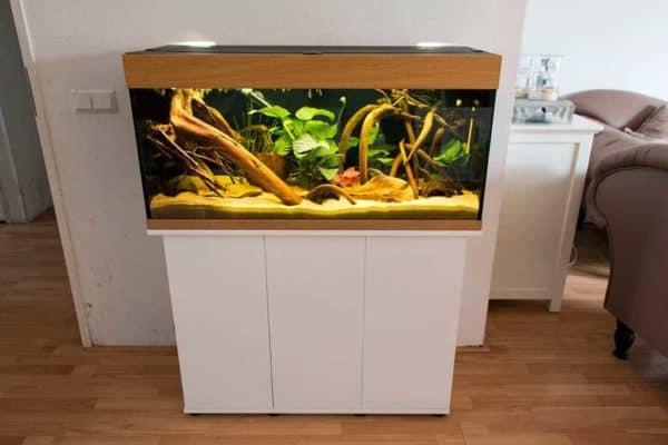 Apistogramma ortegai speciaal aquarium-overzicht