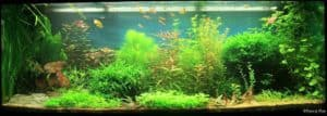 De Juwel Rio 400 Plantenbak van Ervee