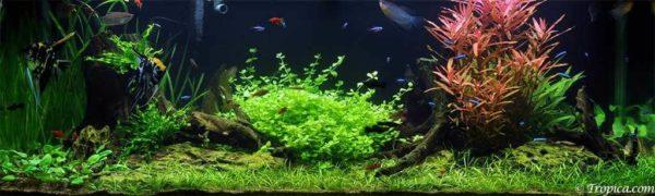 Familie aquarium - 297 liter
