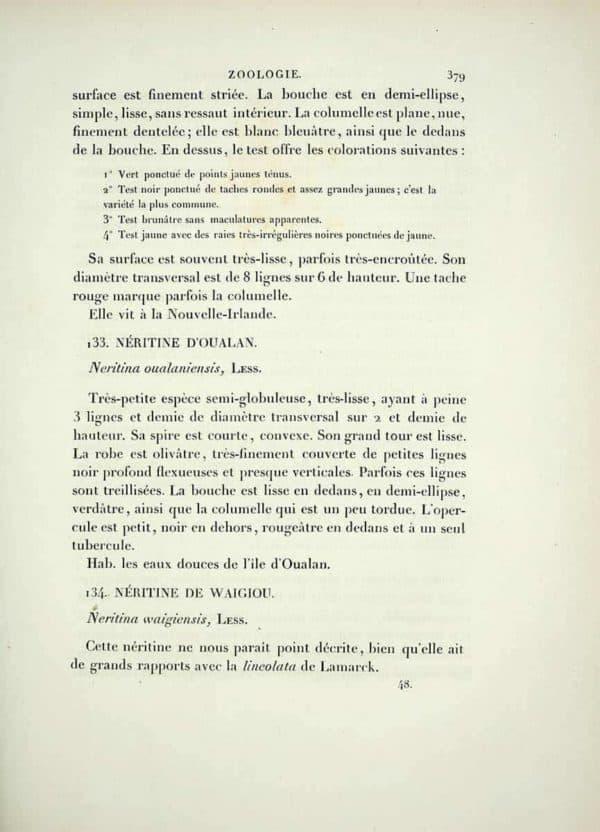 Neritina waigiensis - Eerstbeschrijving pagina 1