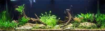 Aquascape met beplanting