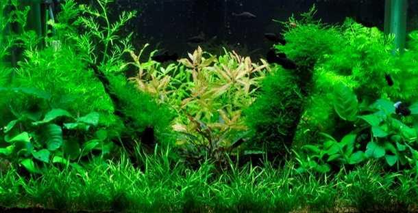 Showcase aquarium