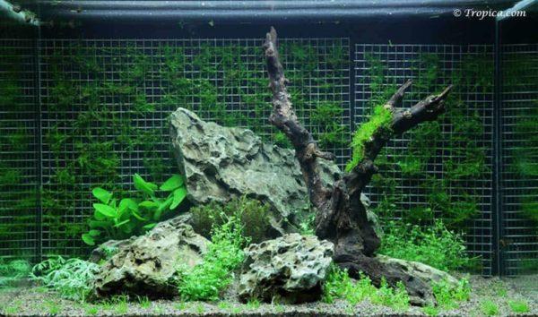 Weeping Moss 100 liter