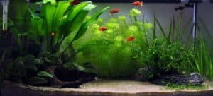 Beginners aquarium na inrichting dag 55