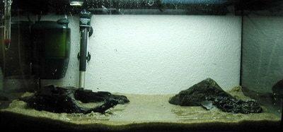 Beginners aquarium inrichten stap 1