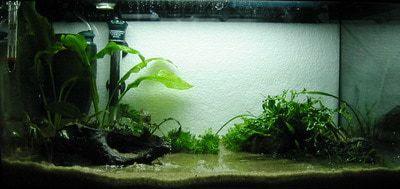 Beginners aquarium inrichten stap 2