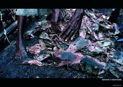 """De film """"Darwin's Nightmare (Darwin's Hofvijver) maakt de omvang van de ramp duidelijk."""