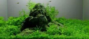 Nano Aquarium - 12 liter