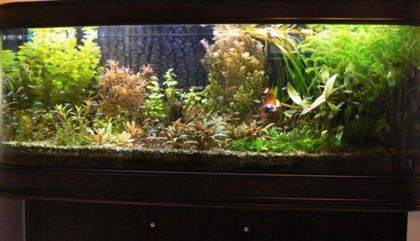 Plantenbak 180 x 50 x 60