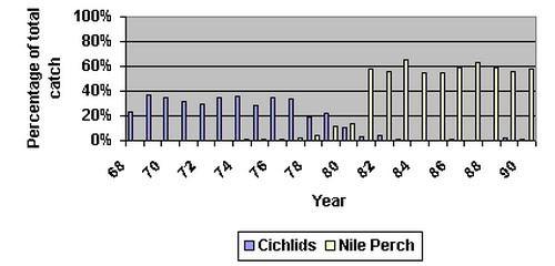 Tabel vangsten cichliden vs nijlbaars