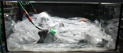 Aquarium wordt afgevuld waarbij alle planten worden afgedekt met plastic