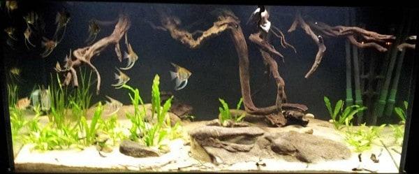 Mennos Zuid Amerika aquarium