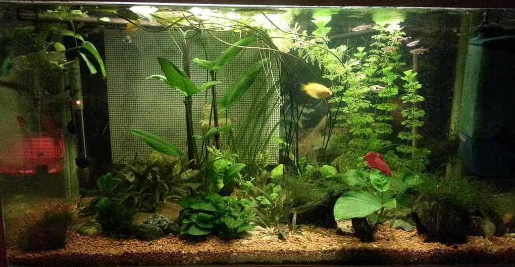 Mijn 80 liter Azie aquarium