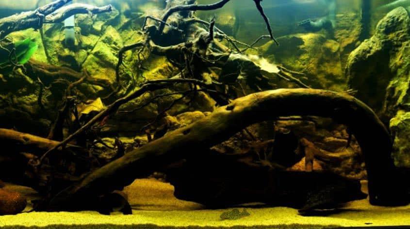 Rio Negro biotoop aquarium