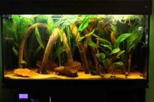 Alberts 100x50x40 - Zuid Amerika aquarium