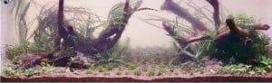 Het aquarium werd met water gevuld totdat het grind net onder water kwam te staan en daarna beplant. De Aponogeton is als laatste geplaatst om te voorkomen dat de zachte bladeren uitdrogen.