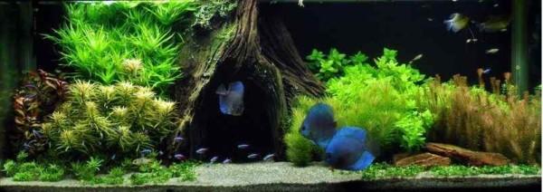 Het woonkamer aquarium - Dag16
