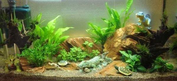 Het kinder aquarium dag 0