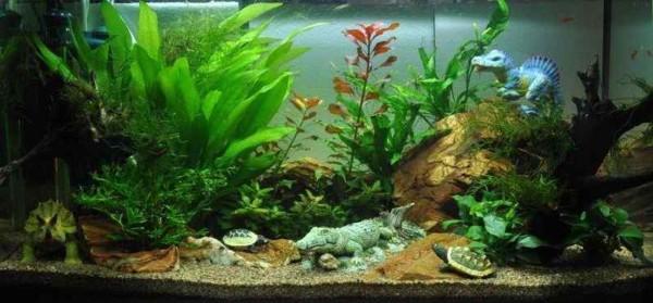 Het kinder aquarium dag 53