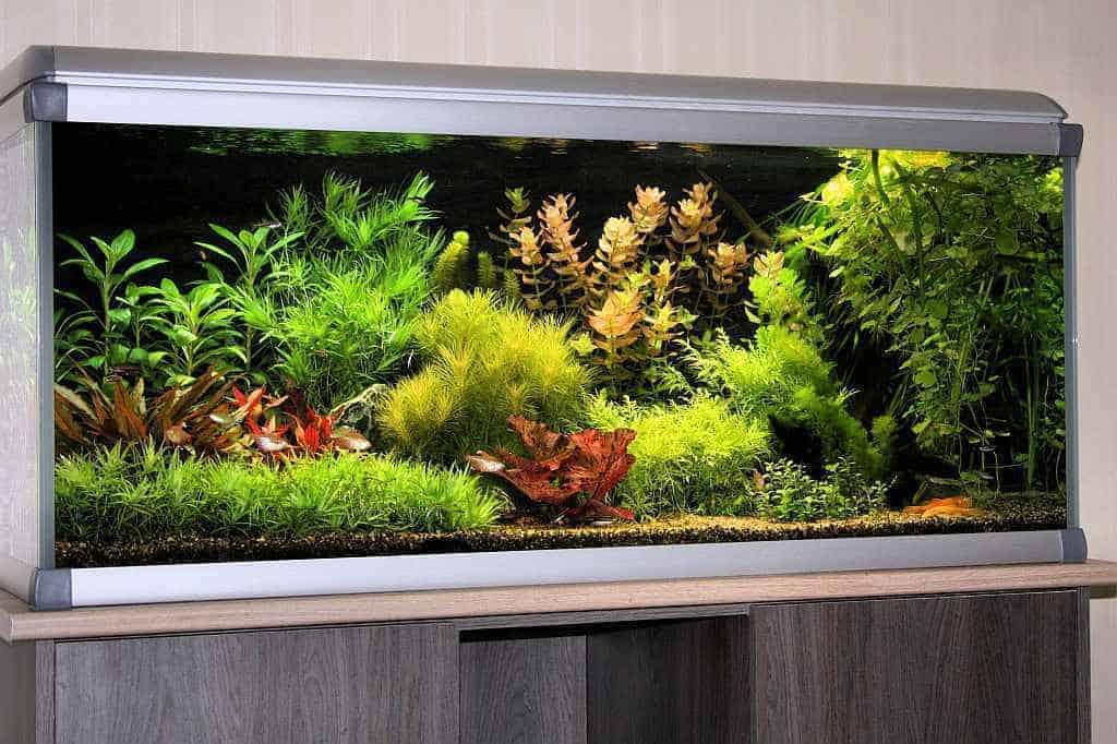 Hollandse Plantenbak Hermanko