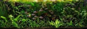 Jungle 240 liter
