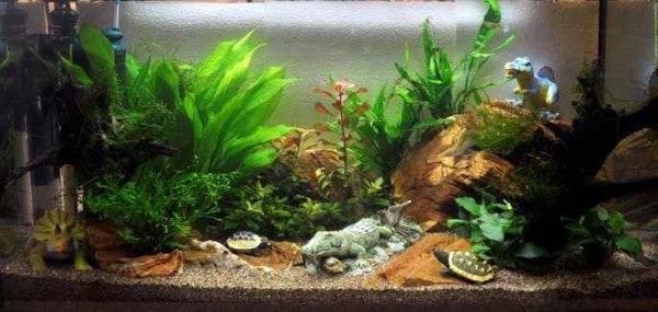 De voorgrond van het kinder aquarium
