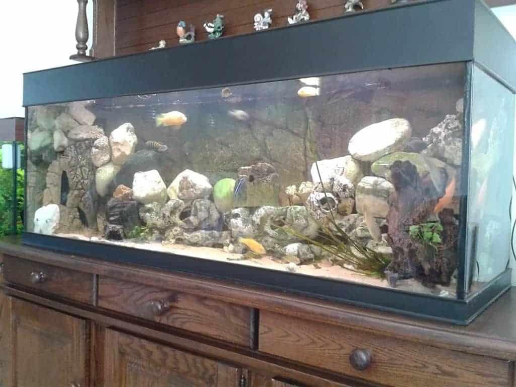 Het 150 cm Malawi Aquarium van Ed