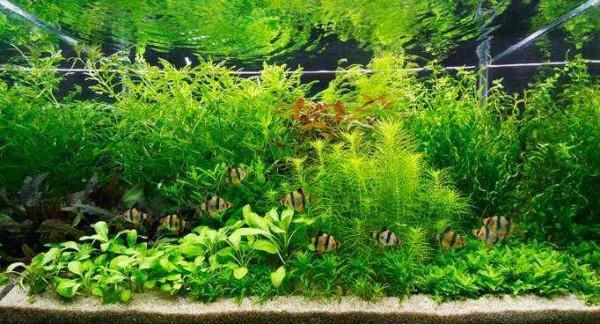Nederlands aquarium 160 liter