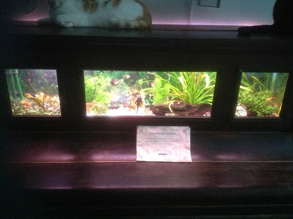 Piano aquarium detail