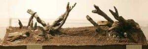 Het aquarium wordt ingericht met Redmoor hout (kienhout kan natuurlijk ook).