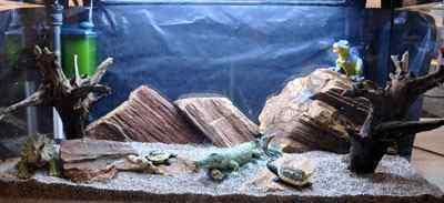 Het kinder aquarium is ingericht met rode rots en mangrove wortels. Dinosauriër speelgoed zijn op de voorgrond en rotsen geplaatst.