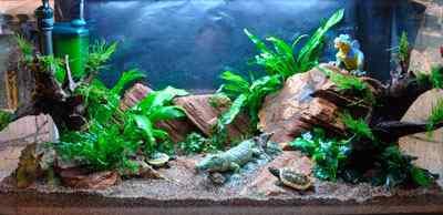 De planten worden ingezet zonder water in het aquarium, maar waarbij om de paar minuten wat water is gesproeid, vooral op het mos en Microsorum.