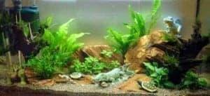 Het resultaat nadat er water aan het aquarium is toegevoegd.
