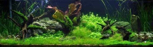 Show Aquarium 297 liter
